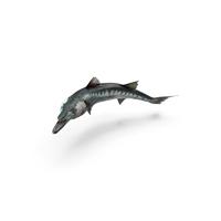 Barracuda Fish PNG & PSD Images