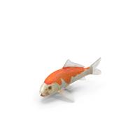 Harivake Koi Fish PNG & PSD Images