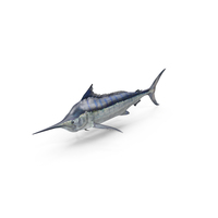 Blue Marlin PNG & PSD Images