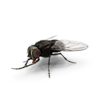 Fly PNG & PSD Images