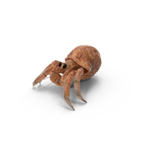 Hermit Crab PNG & PSD Images
