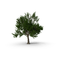 Green Ash Tree PNG & PSD Images