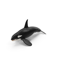 Killer Whale PNG & PSD Images