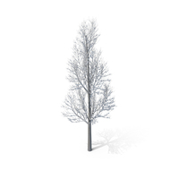 Winter Tree PNG & PSD Images