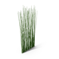 Bamboo PNG & PSD Images
