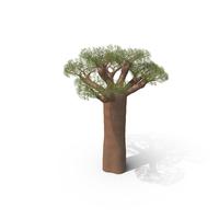 Baobab Tree PNG & PSD Images