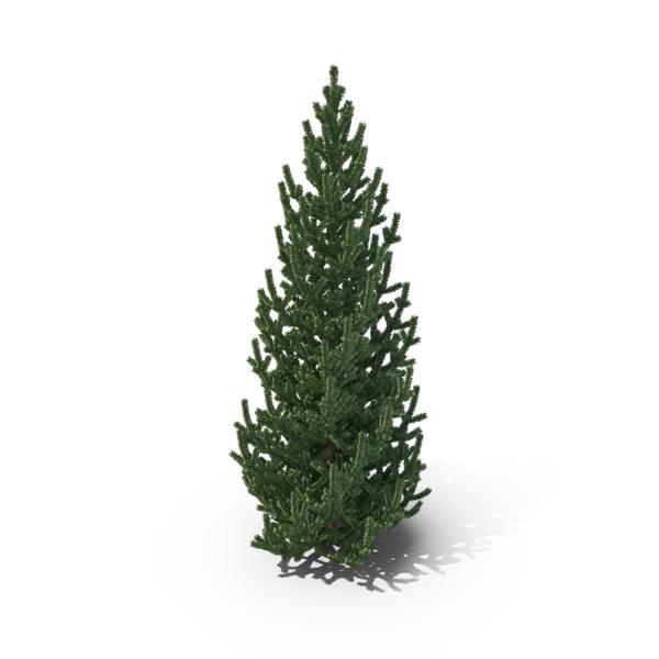 Medium Pine Tree PNG & PSD Images