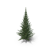 Pine Tree PNG & PSD Images