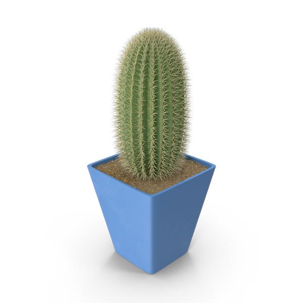 Cactus PNG & PSD Images