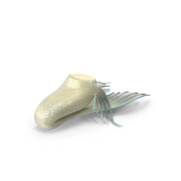 Mermaid Tail PNG & PSD Images