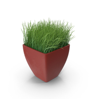 Ornamental Grass PNG & PSD Images