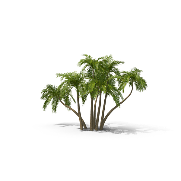 Palms PNG & PSD Images