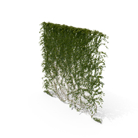Ivy Hanging PNG & PSD Images