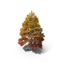 Linden Tree Autumn PNG & PSD Images