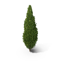 Cupressus Tree PNG & PSD Images