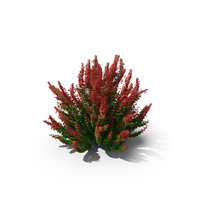 Barberry Green with Red PNG & PSD Images