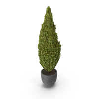 Cupressus in Pot PNG & PSD Images