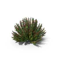 Barberry PNG & PSD Images