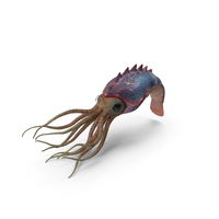 Cephalopod PNG & PSD Images