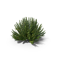 Barberry Bush Green PNG & PSD Images