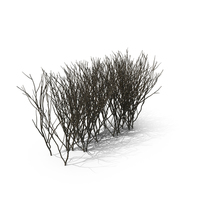 Bare Boxwood PNG & PSD Images