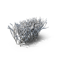 Boxwood Snow PNG & PSD Images