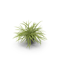 Potted Spider Plant PNG & PSD Images