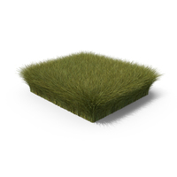 Grass Section PNG & PSD Images
