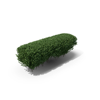 Trimmed Boxwood PNG & PSD Images