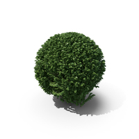 Trimmed Boxwood Shrub PNG & PSD Images