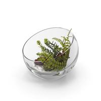 Table Terrarium PNG & PSD Images