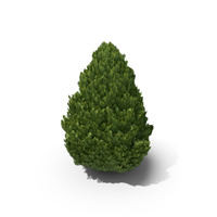 Cupressus PNG & PSD Images