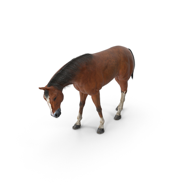Horse Grazing PNG & PSD Images