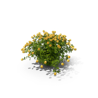 Yellow Rose Bush PNG & PSD Images