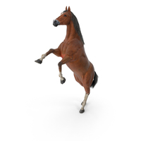 Horse PNG & PSD Images