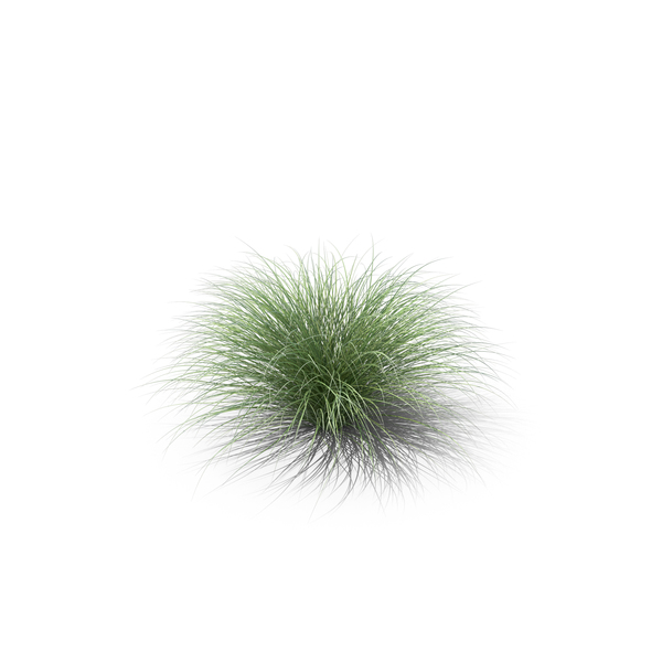 Sedge Grass PNG & PSD Images