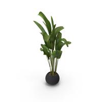 Banana Plant PNG & PSD Images