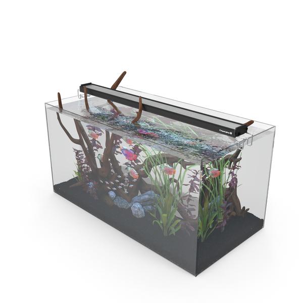 Aquarium PNG & PSD Images