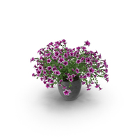 Potted Petunia PNG & PSD Images