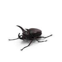 Rhinoceros Beetle PNG & PSD Images