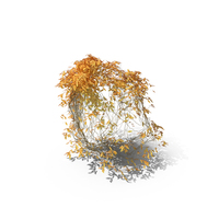 Autumnal Ivy PNG & PSD Images