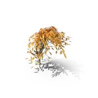 Autumn Vines PNG & PSD Images