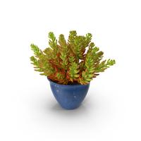 Succulent House Plant PNG & PSD Images