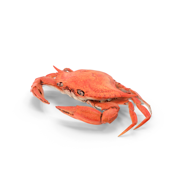 Crab PNG & PSD Images