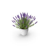 Potted Lavender PNG & PSD Images