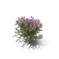Lilac Bush PNG & PSD Images