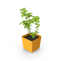 Potted Mint PNG & PSD Images