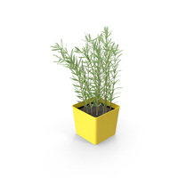Potted Rosemary PNG & PSD Images