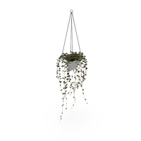 Hanging House Plant PNG & PSD Images