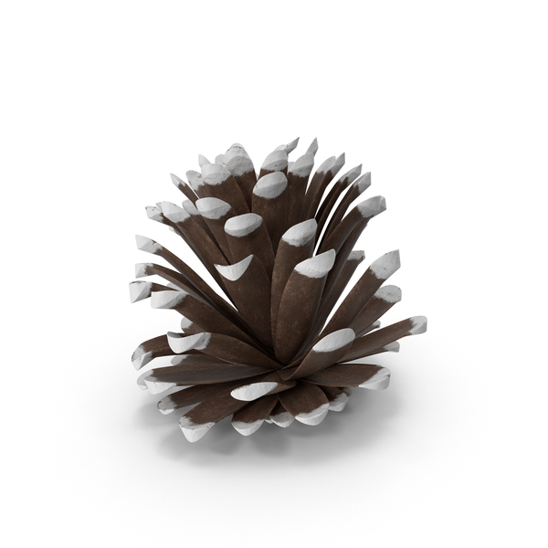 Frosted Pine Cones PNG & PSD Images